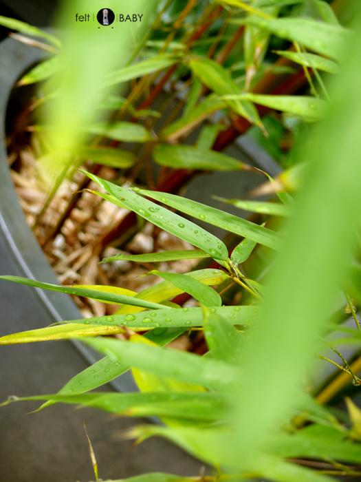 Lifestyle en el pequeño jardín: gotas de agua en las hojas del bambú